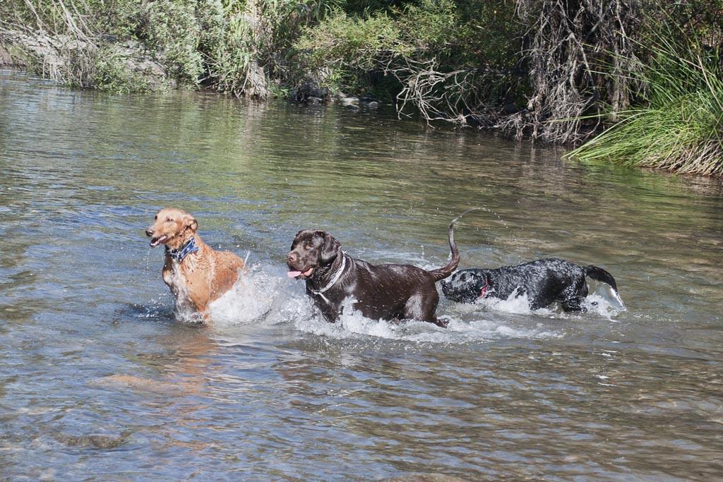Baño en el río (Estepona)