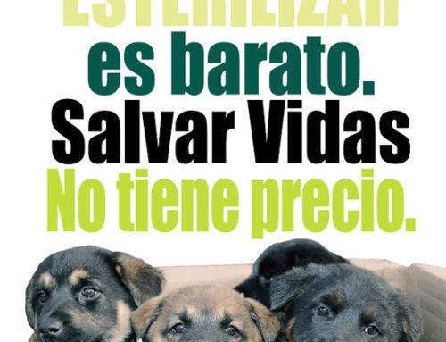 Campaña de esterilización: ¿Por qué esterilizar a tu mascota?