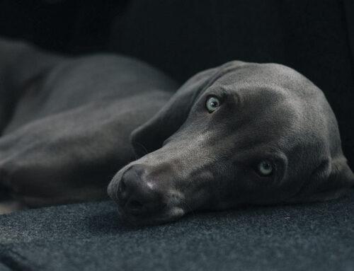 Qué tener en cuenta antes de adoptar un animal de compañía