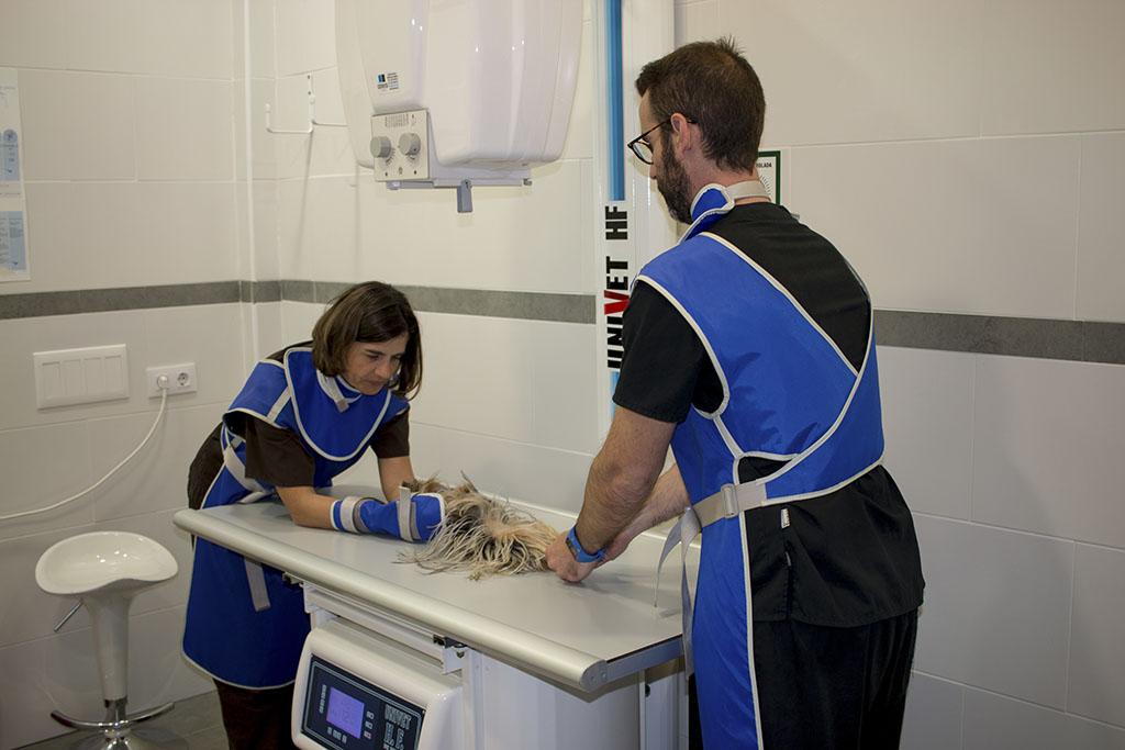 Rayos X - Clínica Veterinaria Puerto Alto (Estepona)