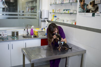 Consulta - Clínica Veterinaria Puerto Alto (Estepona)