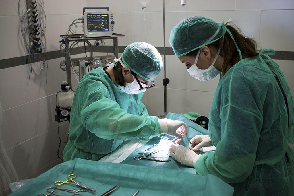 Quirófano - Clínica Veterinaria Puerto Alto (Estepona)