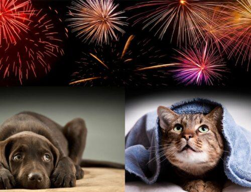 Fuegos artificiales y animales de compañía: estrés garantizado