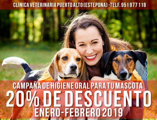 Campaña de higiene oral para tu mascota. 20% de descuento