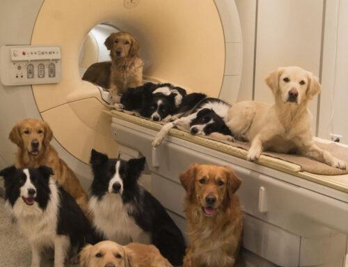 Comunicación humano-perro ¿Entienden nuestras mascotas las palabras?
