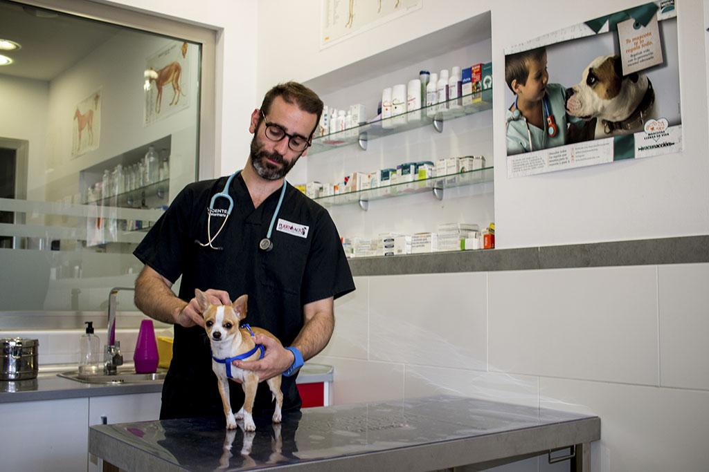 Consultas - Clínica Veterinaria Puerto Alto (Estepona)