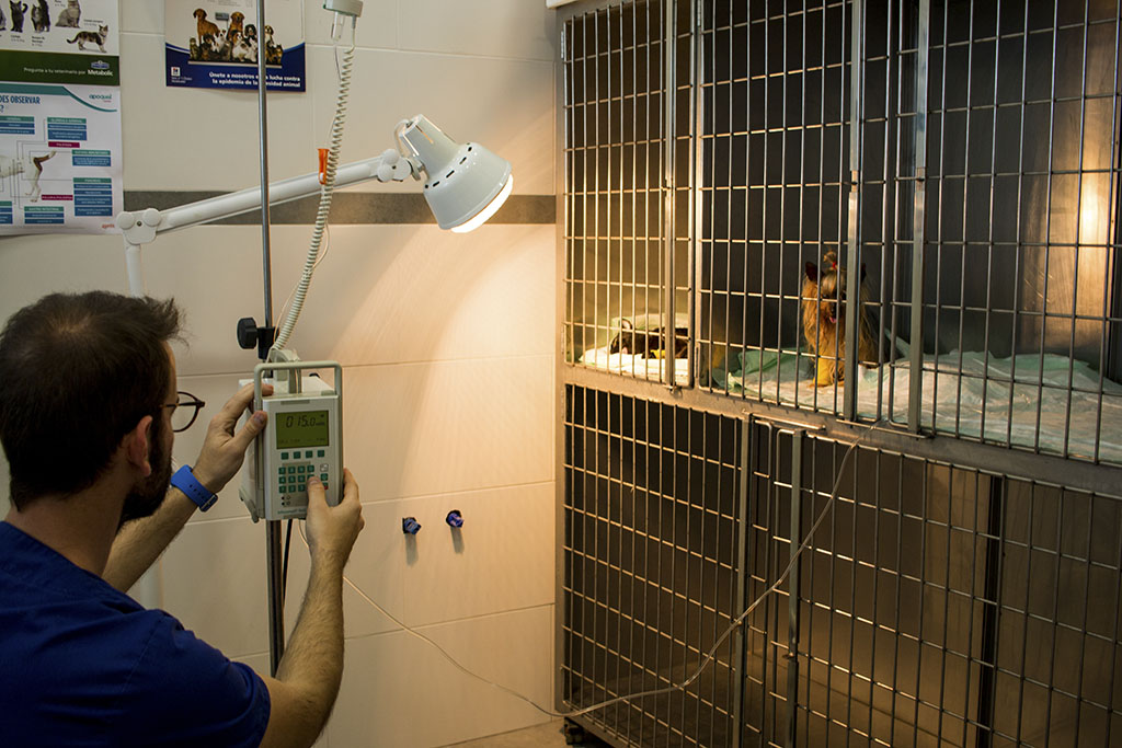 Hospitalización - Clínica Veterinaria Puerto Alto (Estepona)