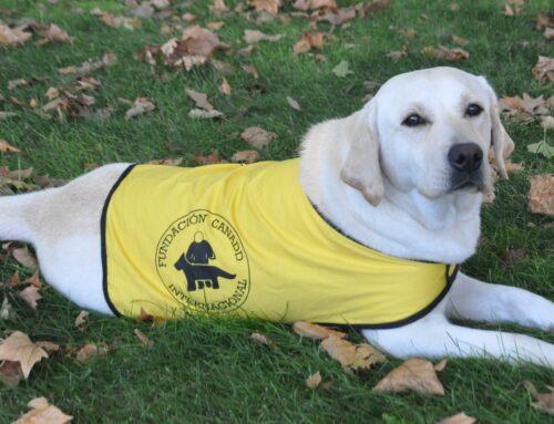 Adiestrada una perra para acompañar a pacientes con alzheimer
