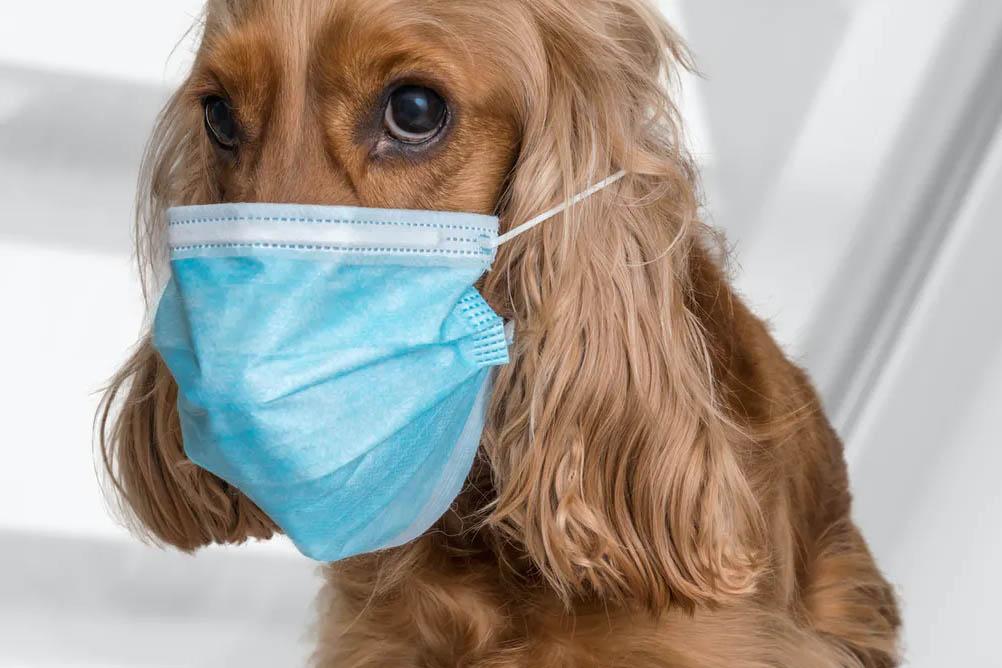 Las mascotas no contagian el coronavirus