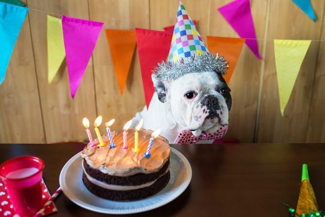 ¿Qué edad tiene mi mascota en años humanos?