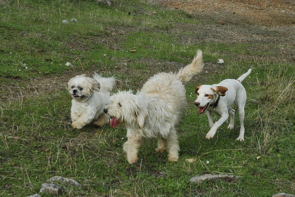 Boba, Lisa y León en uno de sus paseos por el campo