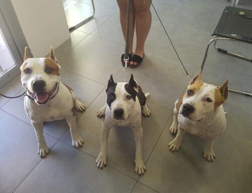 El Gobierno eliminará la lista de razas de perros peligrosos